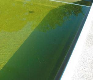 Cuales Son Los Principales Problemas Del Agua De La Piscina Y Sus