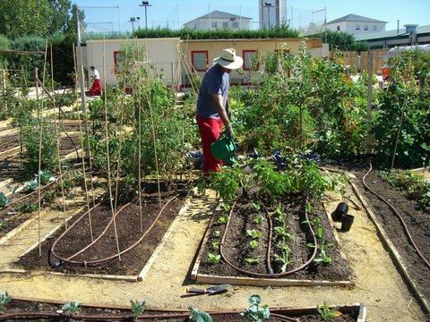 Enero la huerta de montecarmelo planeta huerto for Hacer un huerto en el jardin