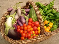 cosecha del huerto de picarona